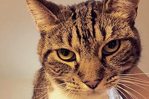 不爽貓身價百萬,豈能容商標權侵